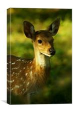 Little Bambi Deer, Canvas Print