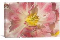 Pink, Canvas Print