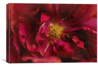 Beauty Even in Death , Canvas Print
