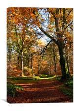 Autumn in Cawdor Woods, Canvas Print