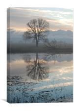 Oaks at dawn