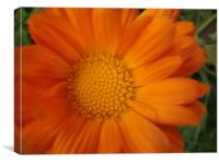Marguerite Orange, Canvas Print