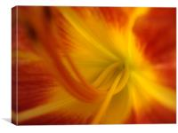 Coeur Iris Orange, Canvas Print