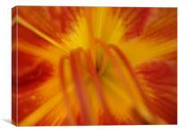 Coeur Iris, Canvas Print