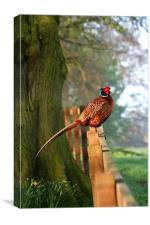 Pheasant on fence, Canvas Print