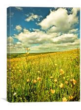 Buttercup Field., Canvas Print