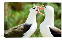Mating Albatross, Canvas Print
