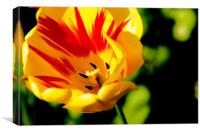 yellow flower detail, Canvas Print