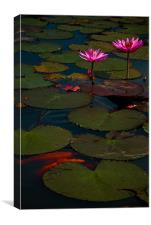 Indonesian Water Lilly, Canvas Print