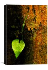 Leaf Love, Canvas Print
