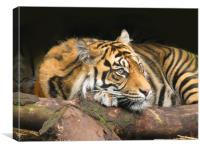 Resting Tiger, Canvas Print