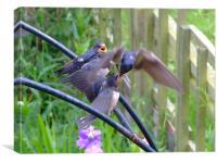 Swallows Feeding, Canvas Print