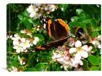 Bee & Butterfly, Canvas Print