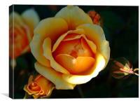 Anniversary Rose, Canvas Print