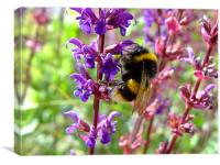 Busy Busy Bee, Canvas Print