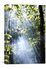 Sunrays, Canvas Print