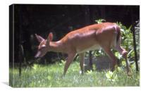 Deer in the Garden, Canvas Print