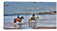 Seahorses?, Canvas Print