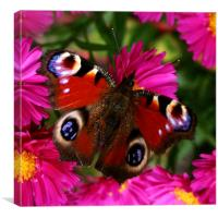 Wings of summer, Canvas Print
