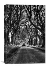 Working under Dark Hedges, Canvas Print
