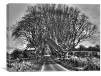 Light in the Dark Hedges, Canvas Print