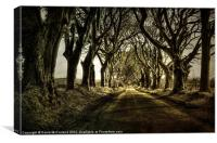 Mysterious Dark Hedges, Canvas Print