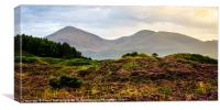 Mourne Mountain heather, Canvas Print