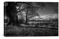 Lurgan Park shadows, Canvas Print