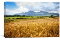 Mournes in harvest time, Canvas Print