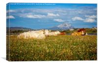 Pastoral Donegal, Canvas Print