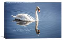 Serene swan, Canvas Print
