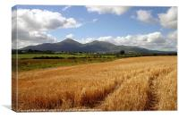 Harvest in the Mournes, Canvas Print