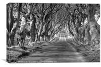 Shadowlands near Armoy, Canvas Print