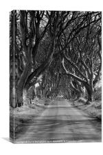 Dark Hedges, County Antrim, Canvas Print