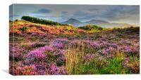 Evening in Mountains of Mourne, Canvas Print