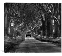 Farming near the Dark Hedges, County Antrim, Canvas Print