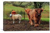 Threes Company, Ewes a Crowd, Canvas Print
