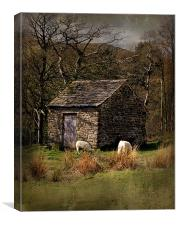 edale sheep hut, Canvas Print