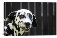 Daisy the Dalmation (Smiles), Canvas Print