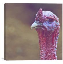 The Sad Turkey, Canvas Print