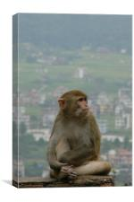 Relaxed, on top of the world, Canvas Print