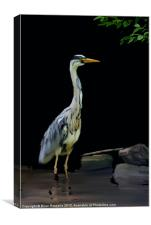 The Heron, Canvas Print