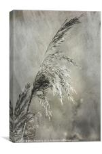 Seeded Grass, Canvas Print