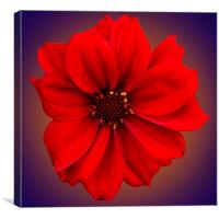 Red dahlia-bishop-of-llandaff, Canvas Print