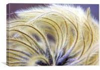 SeedHeads, Canvas Print