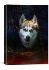 Siberian Husky, Canvas Print
