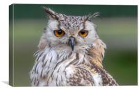 Indian Eagle Owl, Canvas Print