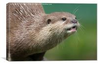 Small Clawed Otter, Canvas Print