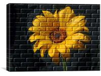 Yellow Wall Flower, Canvas Print