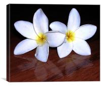 White Tropical Flowers, Canvas Print